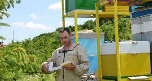 Inovaţie dulce în raionul Ocniţa. Miere vie direct din stup
